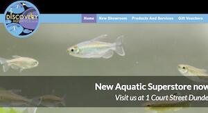 website designed for Discovery Aquatics